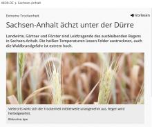 Sachsen-Anhalt ächzt unter der Dürre (mdr.de)